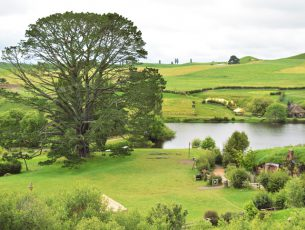 New Zealand landscape view, Matamata.